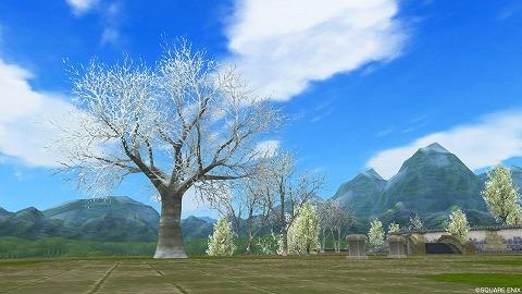 雪積る木々