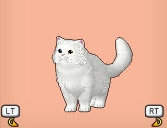 白もふ猫オッド