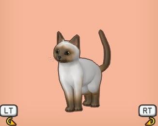 茶マスク猫