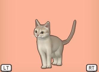 ドラクエ10キナリキツネ猫